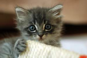 Sorry, get a modern browser to see the kittens
