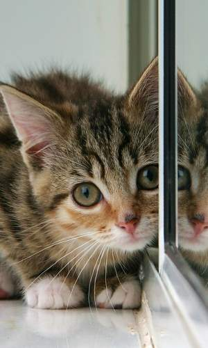 An image of a very cute kitten