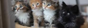 kitten image placeholder