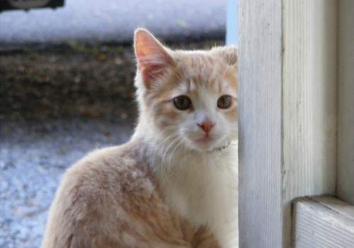 why are cats so cute