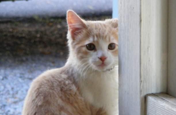 Kittie
