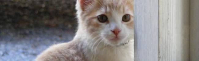 Place Kitten