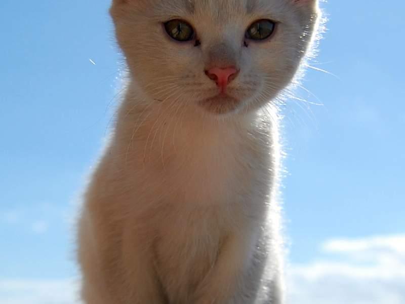 Dummy Kitty Image
