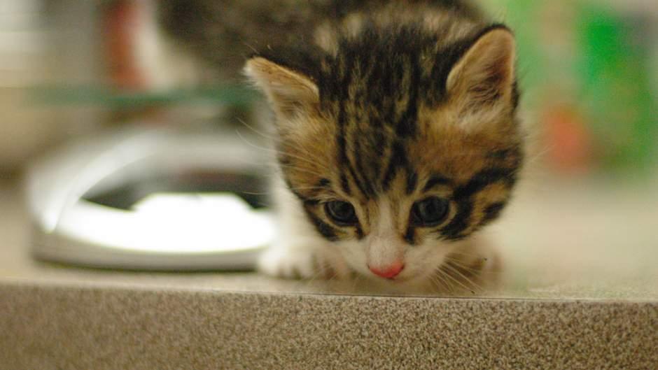 Kitten sample 2
