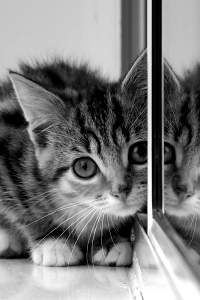 Here is the img alt tag text - a photo of a very cute kitten, in monochrome.
