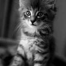 {Place Kitten}