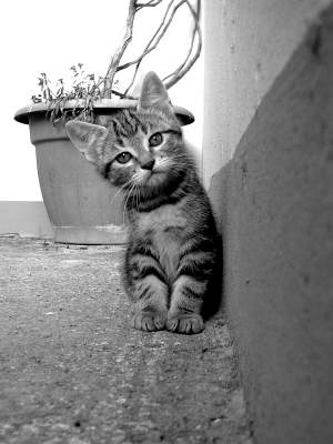 A photo of a kitten