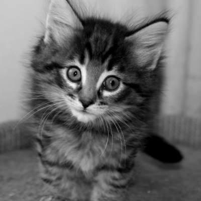 some kittens