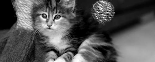 Center Cat