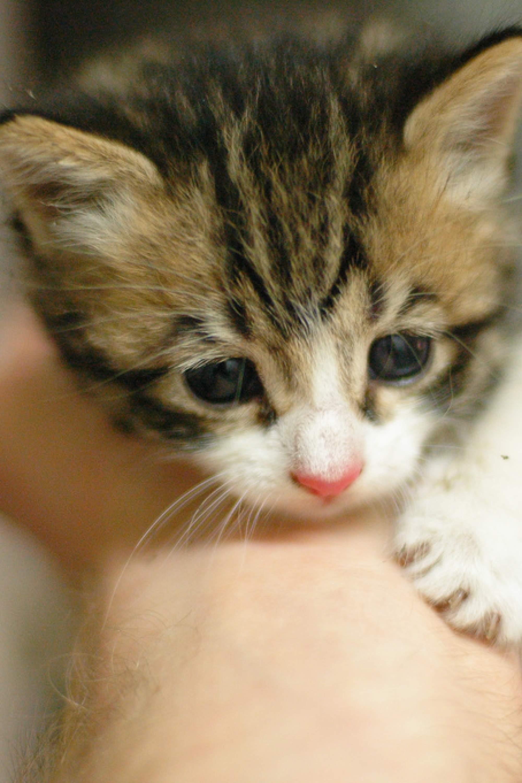 Nano, le chat de Perrine