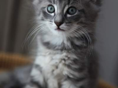 placekitten超好用的猫咪占位图片
