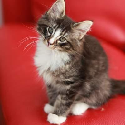 random cat photo 2