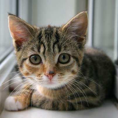 random cat photo 5