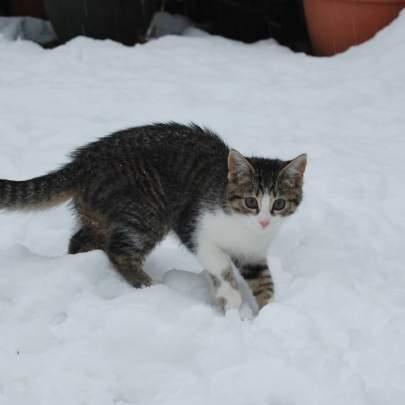 random cat photo 6