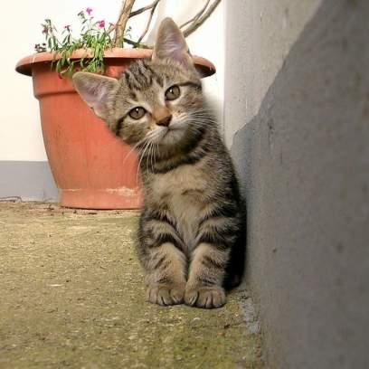 random cat photo 9
