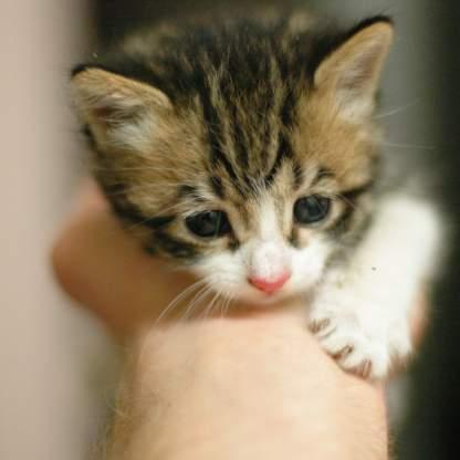 random cat photo 17