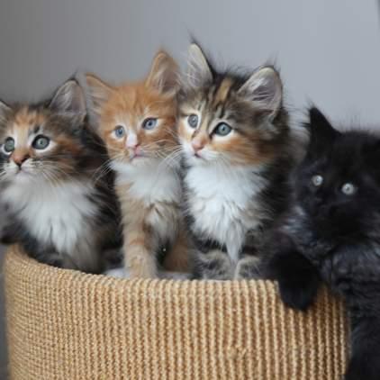 random cat photo 23