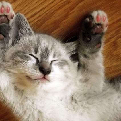 random cat photo 26