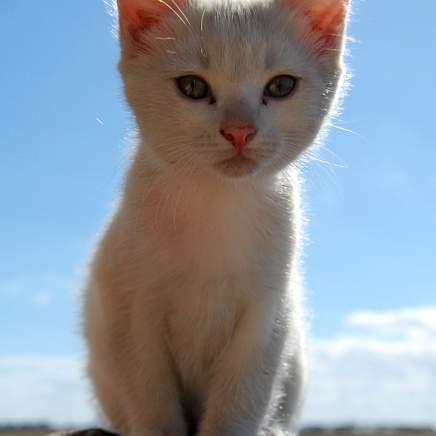 random cat photo 37
