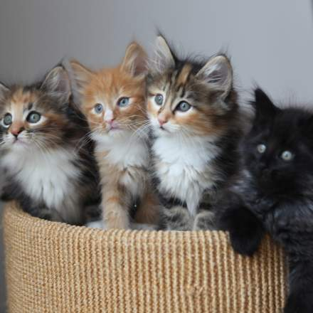 random cat photo 41