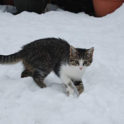 such a cute kitten
