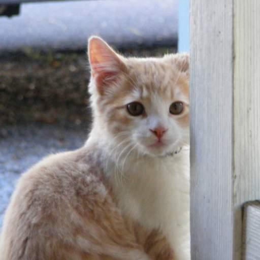 an even more cute kitten
