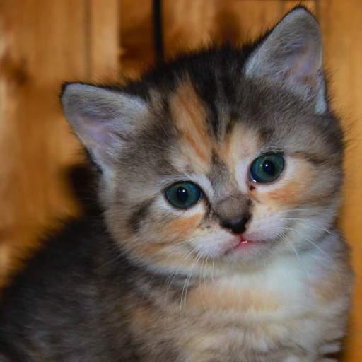 super dooper cute kitten