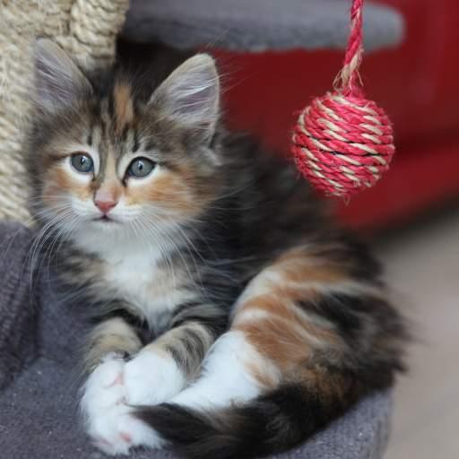 awww such a cute kitten