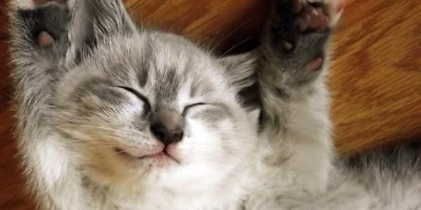 An adorable kitten