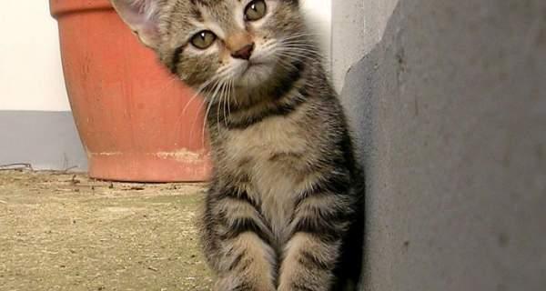 Kitten staring into camera.