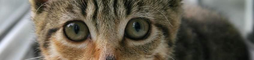 Random Kitten Image