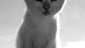 Look, kittens!