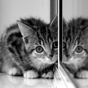 a kitten!