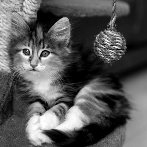Katzenfoto 500x500